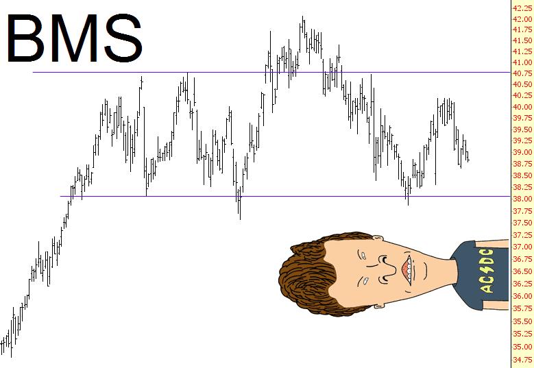 1113-bms