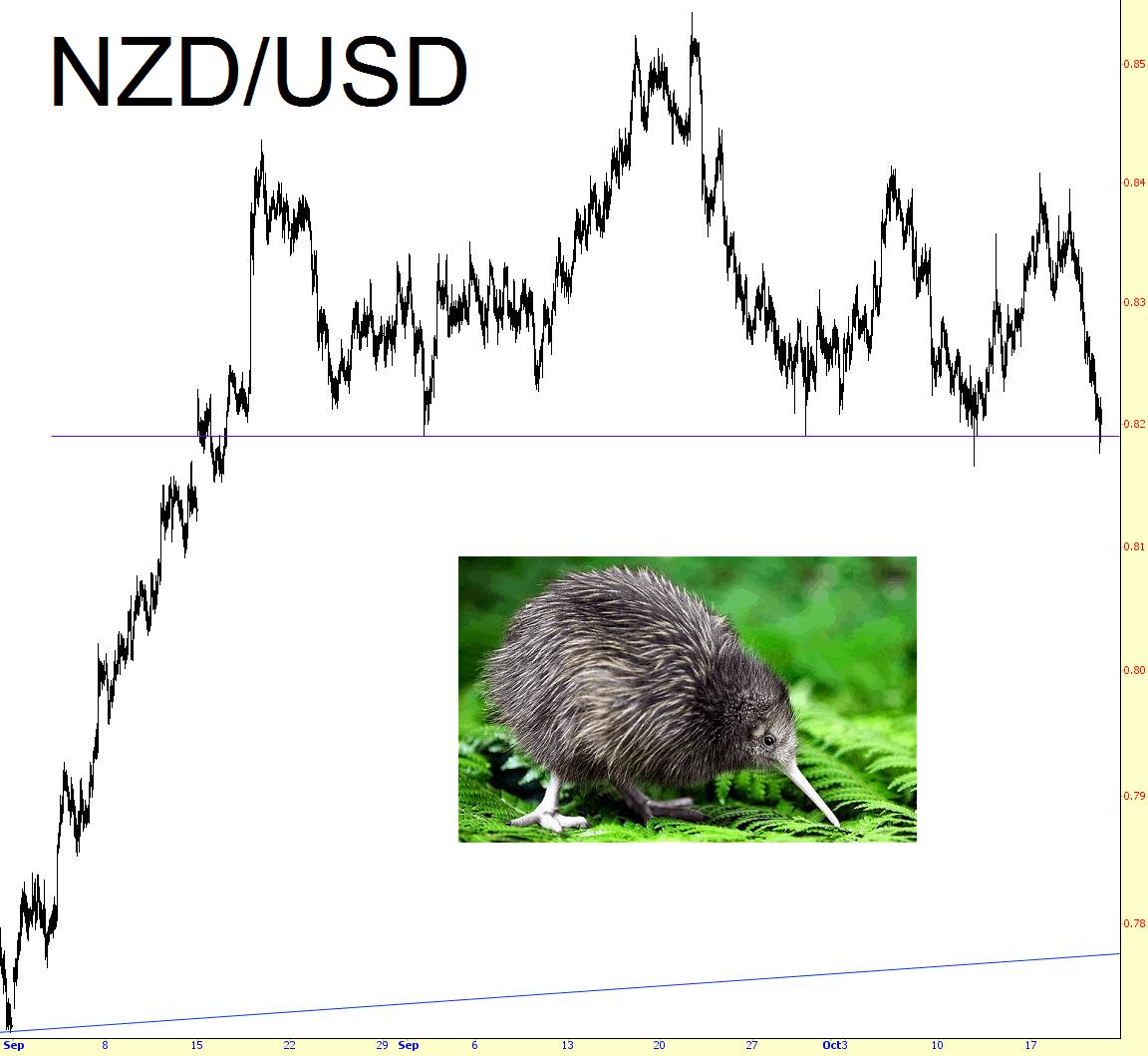 1121-kiwi