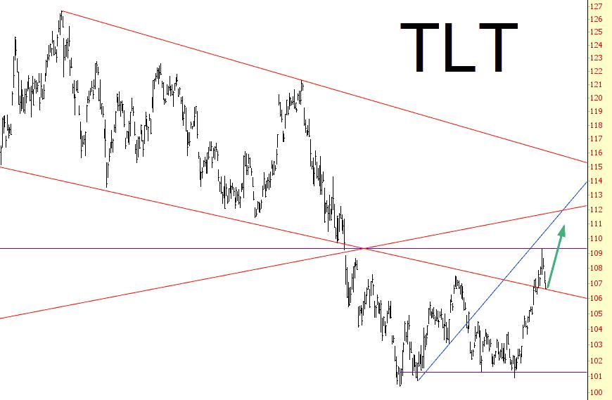 0206-TLT