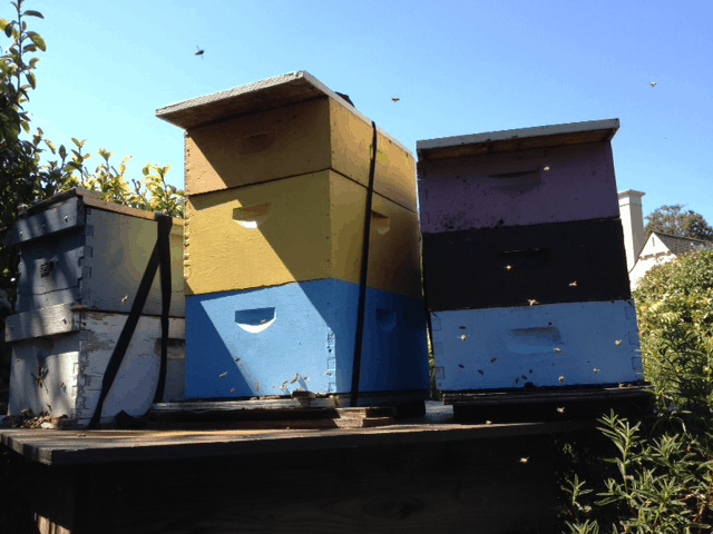 0903-bees
