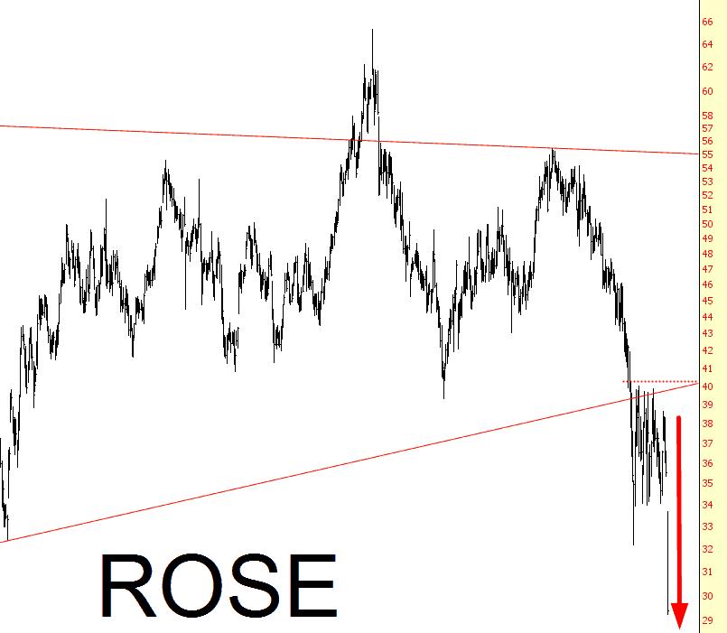 1128-rose