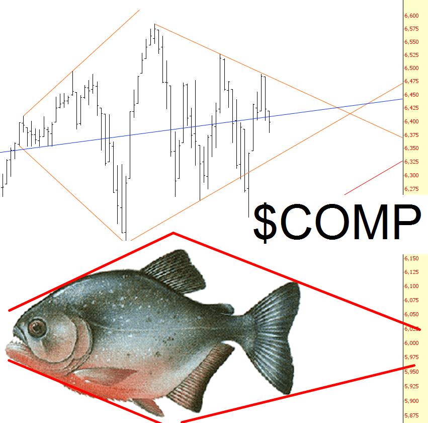 0209-fish